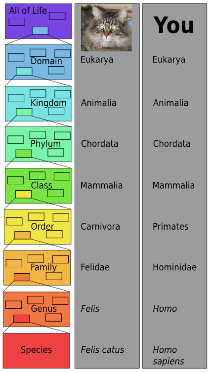 the history of modern classification A classification system that shows the evolutionary history of species is a phylogenetic classification, and reveals the evolutionary relationships of species cladistics – scientist that use cladistics assume that as groups of organisms diverge and evolve, they retain some unique inherited characteristics that taxonomists call derived traits.